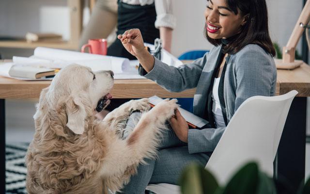 tu perro te hará compañía